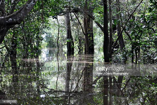 Flooded amazon rainforest