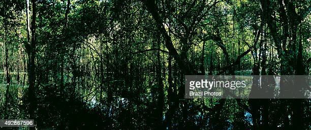 Flooded dense forest by the Javaé River high biodiversity Bananal Island Tocantins State Amazon Brazil