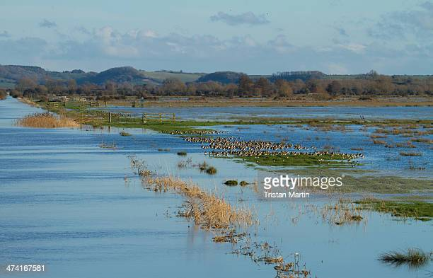 Flooded farmland beside the King's Sedgemoor Drain at Greylake on the Somerset Levels. Large areas have been flooded after weeks of heavy winter...