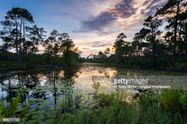 flooded field - gulf shores alabama stock pictures, royalty-free photos & images