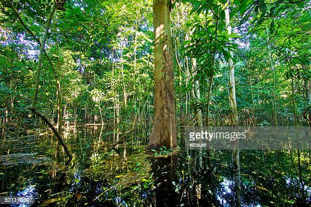 Flooded forest, Amazon