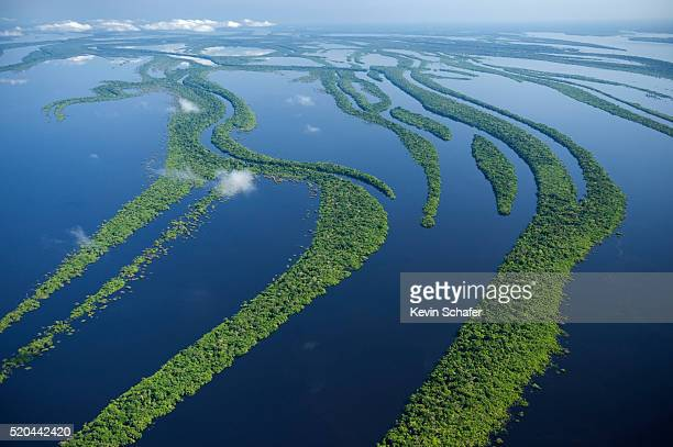 flooded forest in the anavilhanas archipelago - archipelago stock pictures, royalty-free photos & images