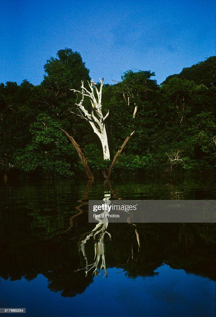 01e6778c059 Flooded forest near Manaus