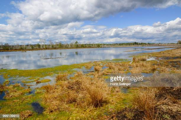 Flooded peat cutting area with colonisation of peat moss and rushes, Stammbeckenmoor near Raubling, Alpine Uplands, Bavaria, Germany