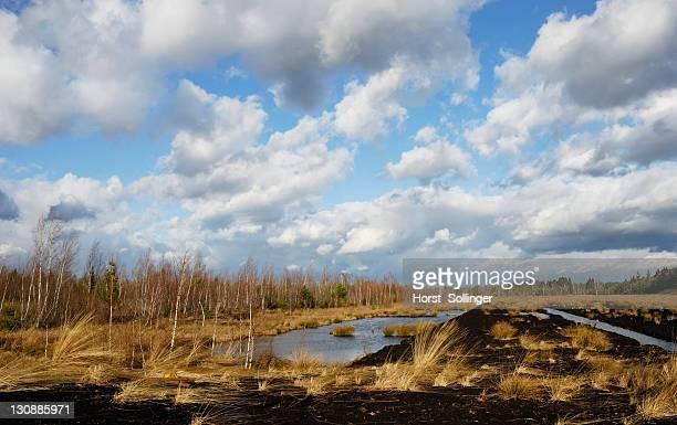 Flooded peat drain, Nicklheim, Bavaria, Germany, Europe