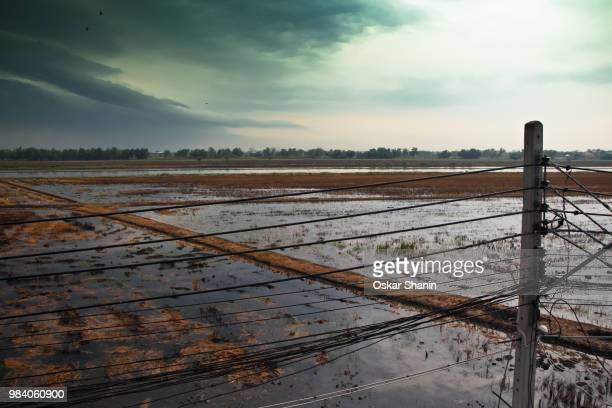flooded rice field - oskar stock pictures, royalty-free photos & images