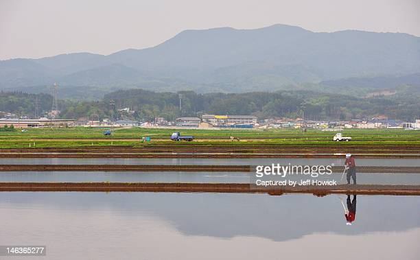 Flooded rice fields and mountains