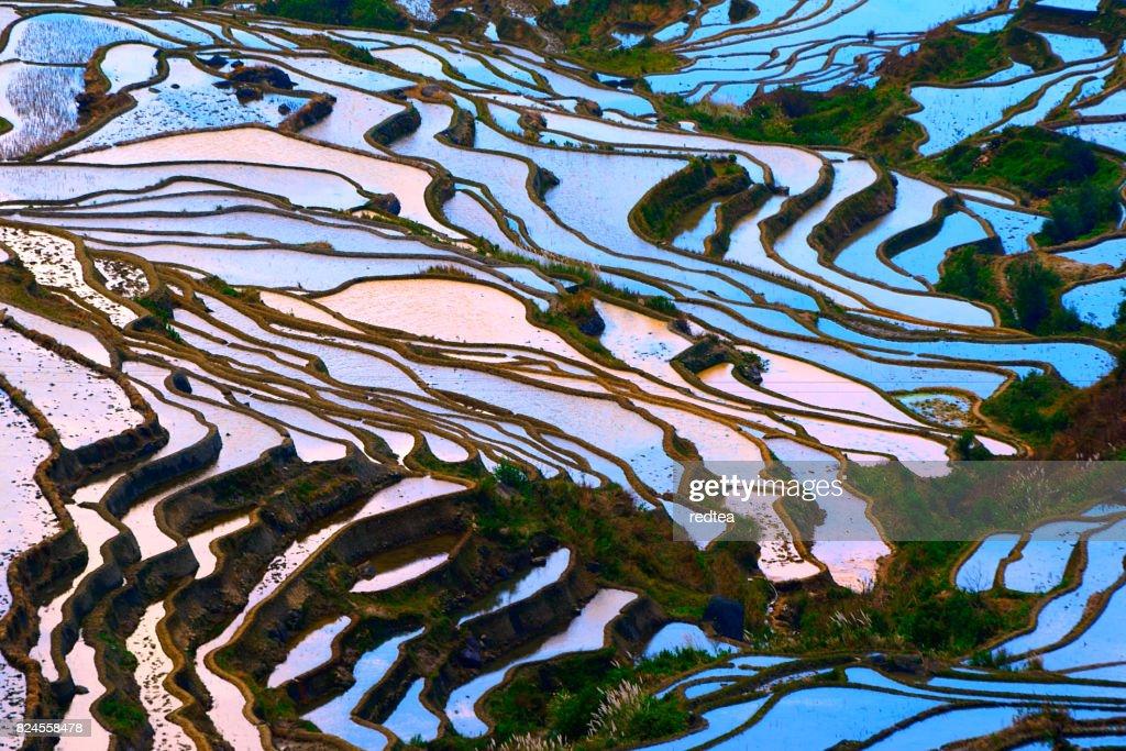 Viel Reis Felder in South China : Stock-Foto