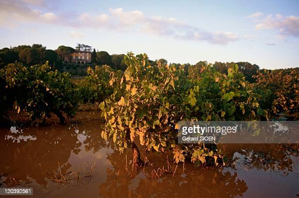 Flooded vineyards in Carces, France - Provence, in the Upper Var region near Carces.