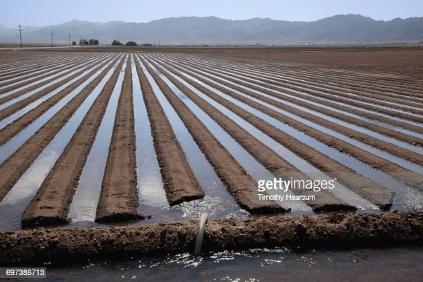 flooding between raised rows prior to planting - timothy hearsum fotografías e imágenes de stock