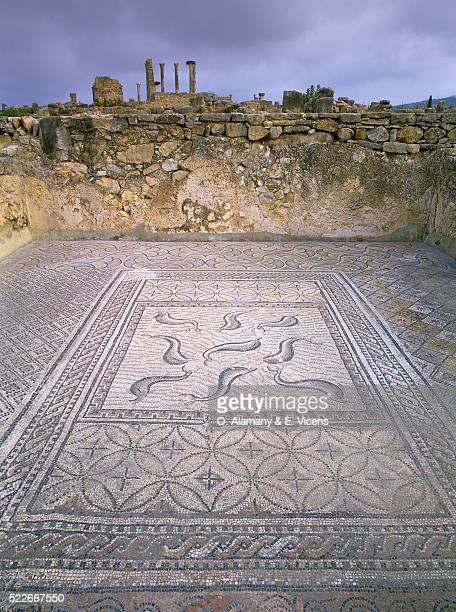 floor mosaic at the roman ruins at volubilis - volubilis fotografías e imágenes de stock