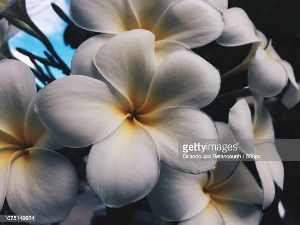 Flor en ocaso