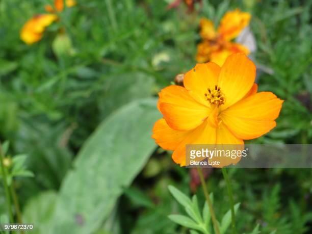 flor resplandeciente - resplandeciente stock pictures, royalty-free photos & images