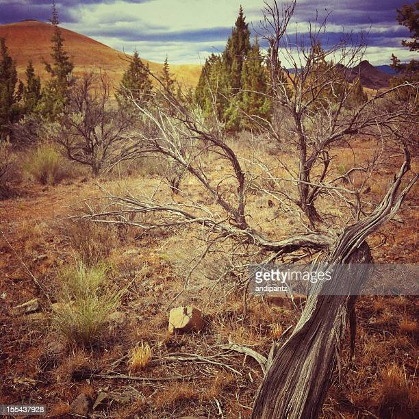 flora in the painted hills - painted hills stock pictures, royalty-free photos & images