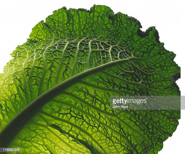 flora - kale stock photos and pictures