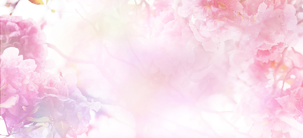 Floral abstract pastel background 1125806293
