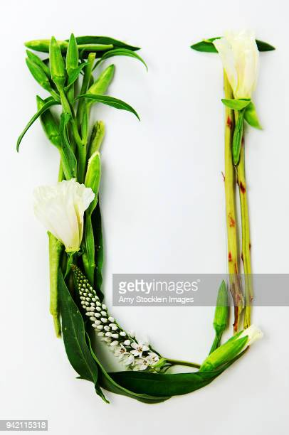 floral alphabet letter u - capital letter stock pictures, royalty-free photos & images