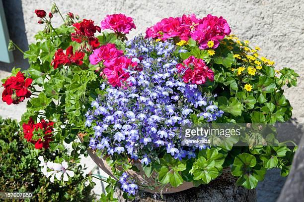 Blumenarrangement in einem Topf