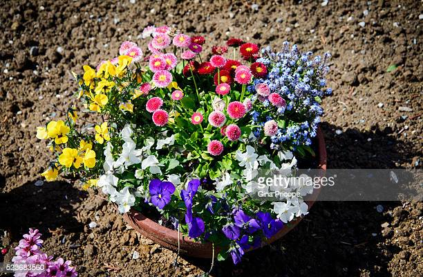 floral arrangement in a pot. - vaso stock pictures, royalty-free photos & images