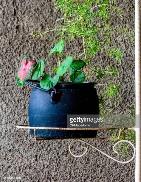 floral arrangement with geranium and antoury inside an iron casserole. - crmacedonio photos et images de collection