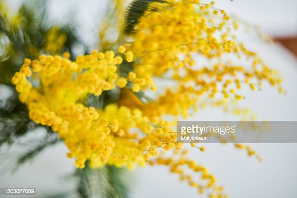 floral background branch mimosa light background