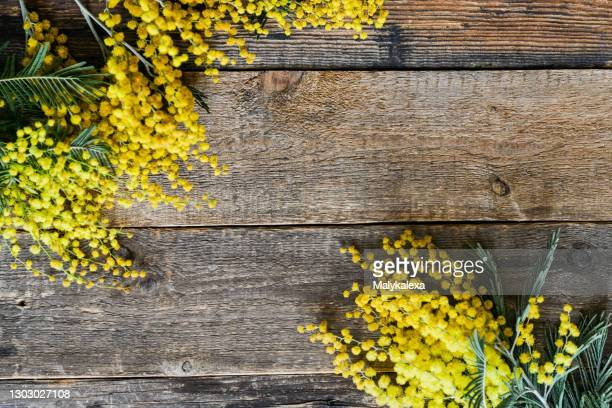 floral background branch mimosa natural wooden