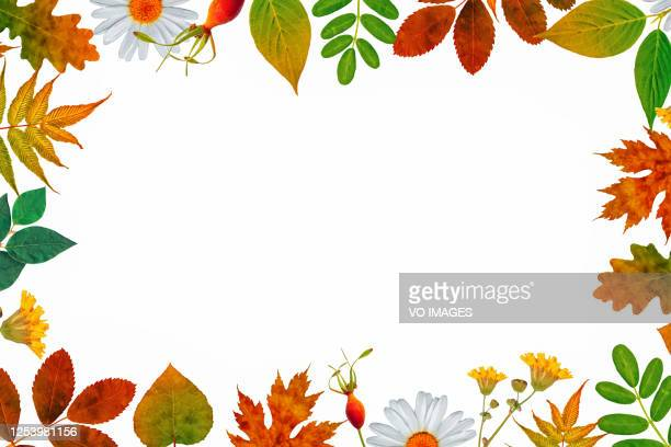 floral background. floral frame on white background. illustration. book cover - autumn leaf stock pictures, royalty-free photos & images