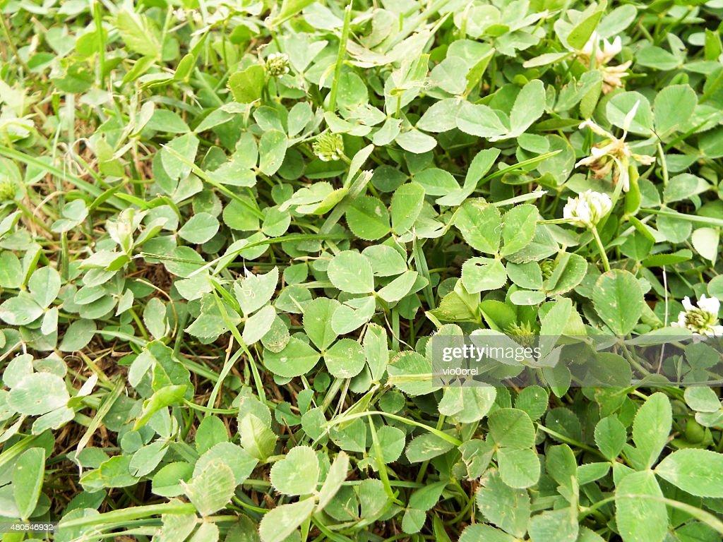 Floral Hintergrund : Stock-Foto
