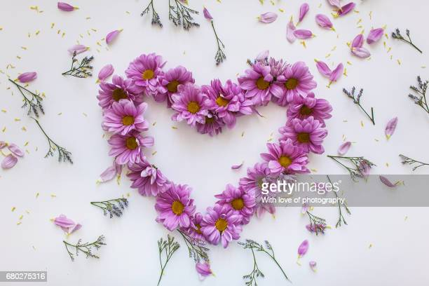 Purple Heart Flower Stock Photos And Pictures Getty Images
