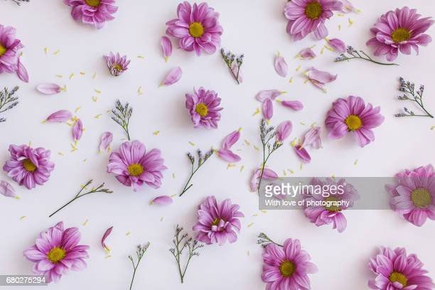 floral background, pink flowers on white, romance, flower heads on white, flowers organized - motivo floreale foto e immagini stock