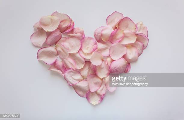 floral background, pink petals heart on white, romance, symbol of love - rose petal stock pictures, royalty-free photos & images