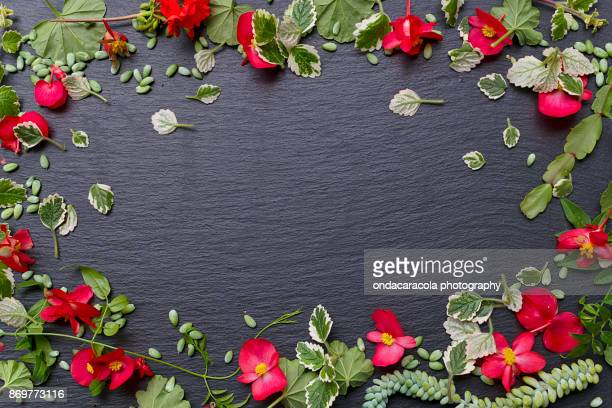 floral blackboard background - chalkboard background stock photos and pictures