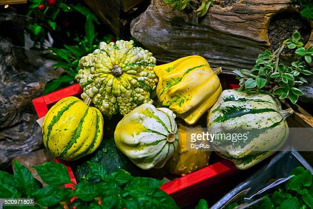Floral decoration with various varieties of squash