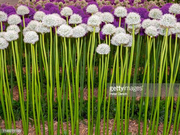 A floral display on press day at Chelsea Flower Show on May 20 2019 in London England The RHS Chelsea Flower Show takes place annually at the Royal...