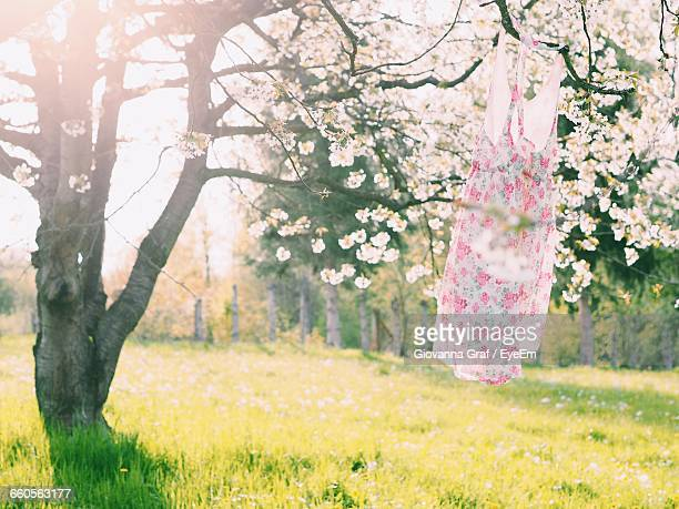 Floral Dress Hanging On Tree
