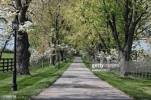 floral entrance to a horse farm - kentucky stock pictures, royalty-free photos & images