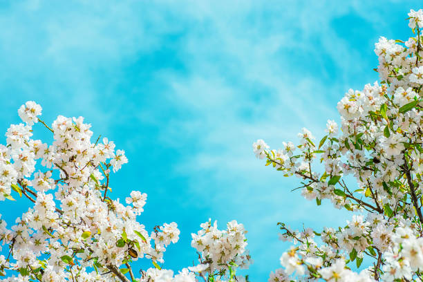 free blue sky template images pictures and royalty free stock
