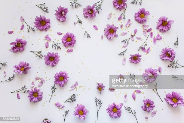floral pattern, flowers flat view background, flowers on white background - motivo floreale foto e immagini stock