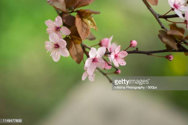floral photo - nikitina stock pictures, royalty-free photos & images