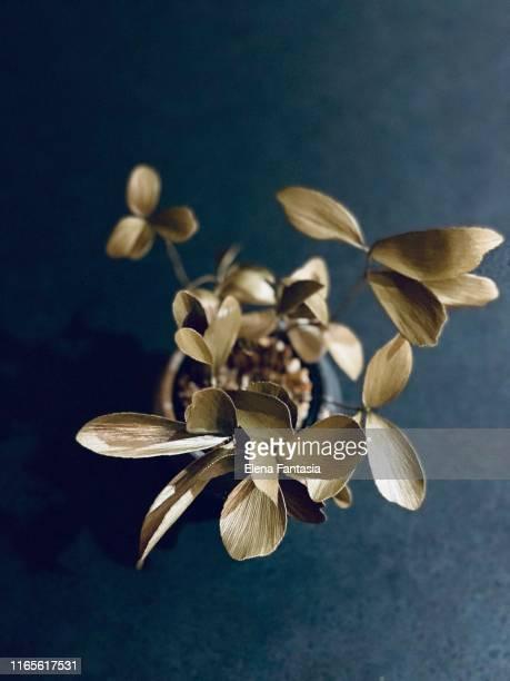 floral - elena blume stock-fotos und bilder