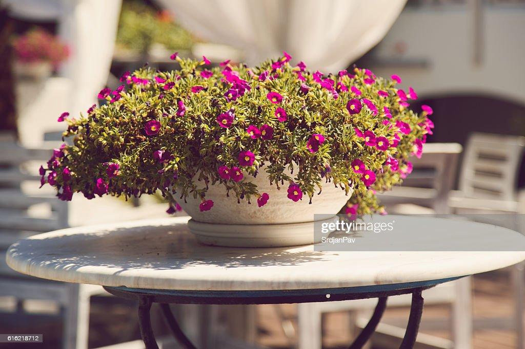 Floral summer arrangement : Foto stock