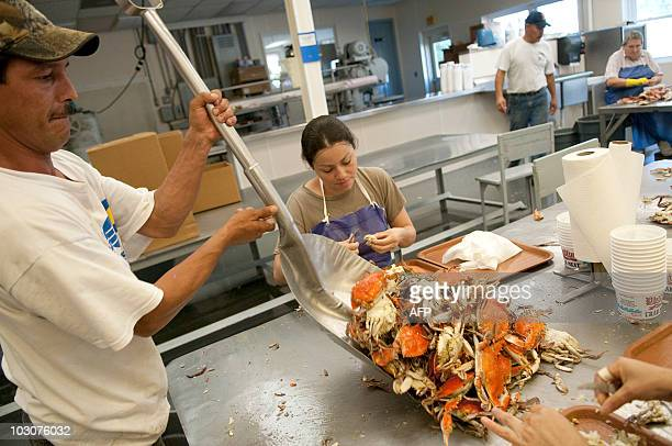Florencia Rubio Mayorga keeps working while Oscar Munos shovels crabs to be picked at the table as women work at picking hundreds of pounds of crabs...