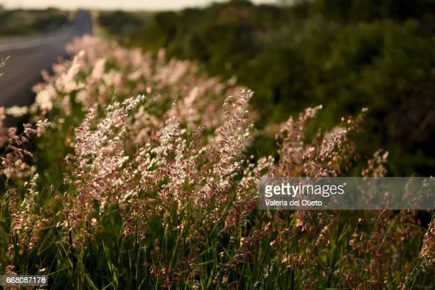 flores da estrada - sem fim... valéria del cueto stock pictures, royalty-free photos & images