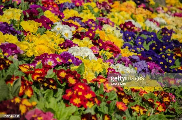 Flores de Estambul