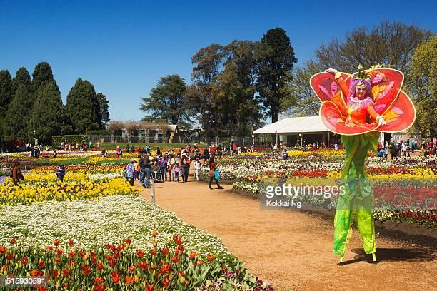 floriade canberra - canberra photos et images de collection