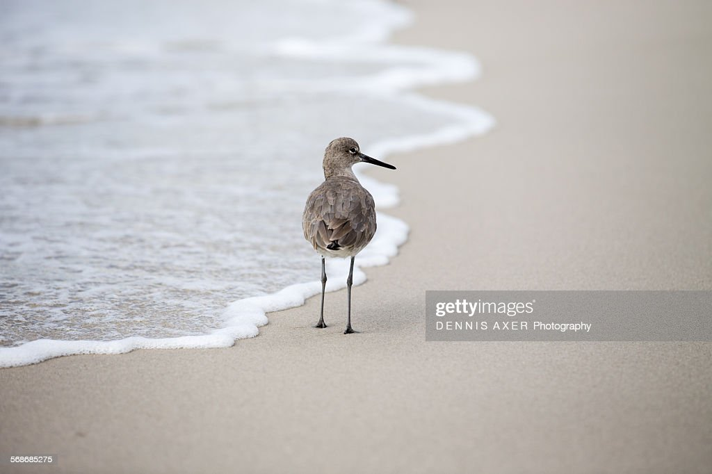 Florida Beach Bird : Stock Photo