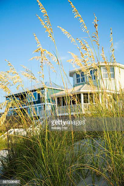 florida beach sand grass with homes - gulf coast states stock pictures, royalty-free photos & images