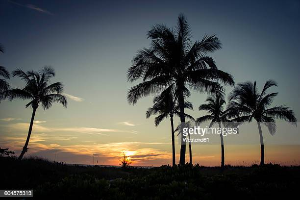 usa, florida, captiva island, palm trees at sunset - captiva island imagens e fotografias de stock