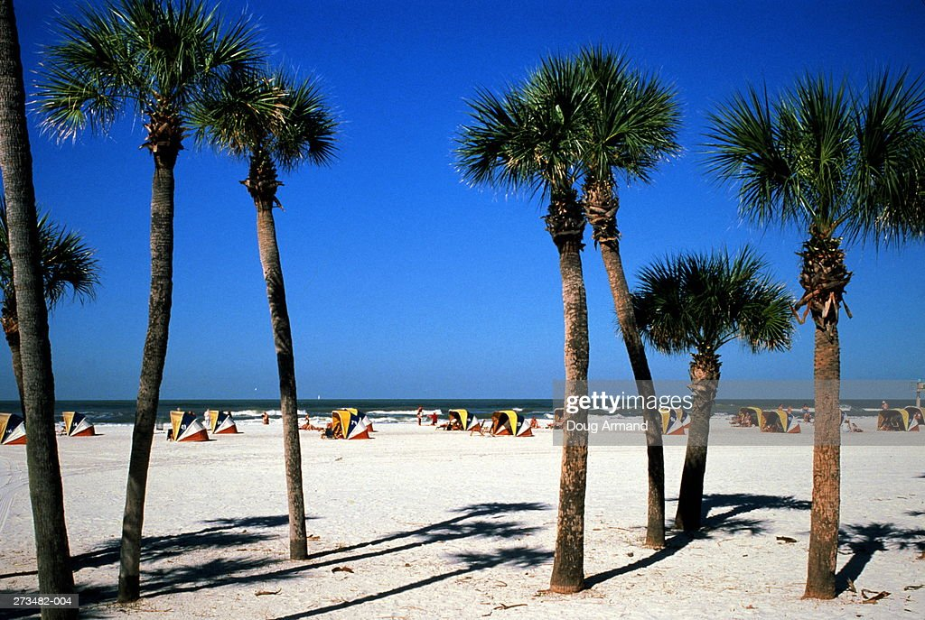 USA Florida Clearwater Beach Palm Trees In Foreground