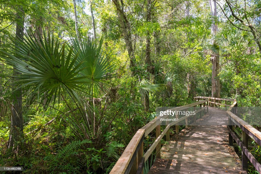 USA, Florida, Copeland, Fakahatchee Strand Preserve State Park, boardwalk through swamp : Stock Photo